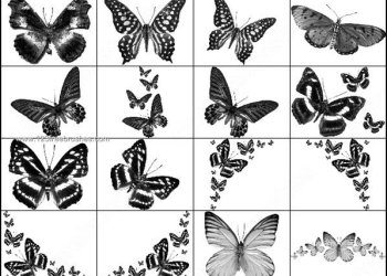 Photoshop Brushes Butterfly Free Download