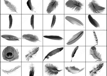 Free Feather Photoshop Brushes