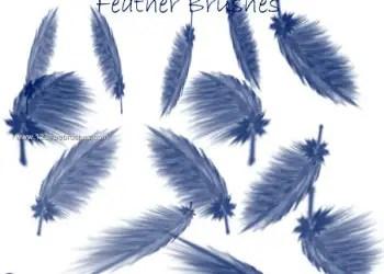 Feather Brushes Free Photoshop Brushes