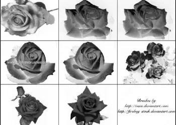 Beautiful Rose Flower Photoshop Brushes