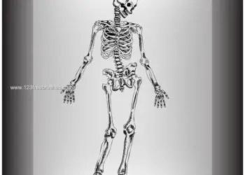 Hand Drawn Skeleton Photoshop Brushes Free