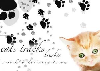 Cats Tracks