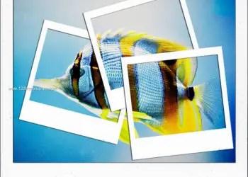 Polaroid Frames Set 22
