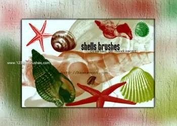 Sea Shells Free Brushes