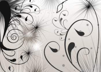 Swirls and Seeds