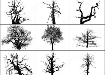 Photoshop Tree Silhouette Brushes Free
