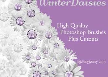 Winter Daisies