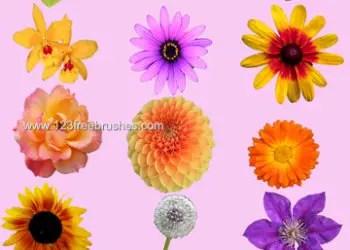 Rose – Sunflower – Daisy Flowers
