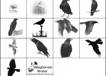 Free Raven Photoshop  Brushes