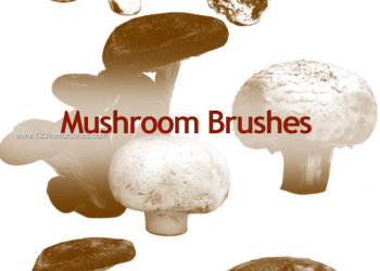 Mushrooms 7