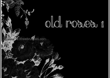 Old Rose Flowers