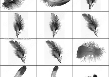 Feathers Free Photoshop Brushes