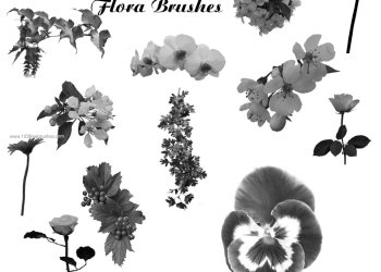Photoshop 7 Flower Brushes