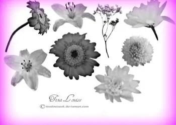 Flower Brushes For Photoshop Cs3
