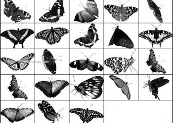 Butterfly Photoshop Brushes Pack Free