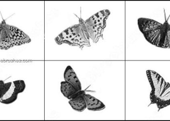 Photoshop Butterfly Brushes
