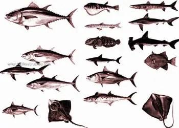 Fish Photoshop Brushes Free Download