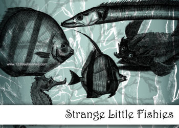 Strange Little Fishes