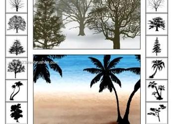 Palm Tree Shapes