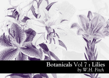 Botanicals Lilies