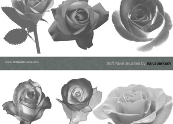 Smooth Roses