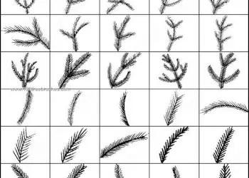 Pine Brushes Photoshop