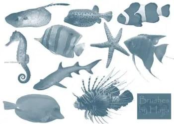 Fish – Starfish and Seahorse
