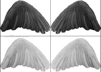 Black Angel Wings Photoshop Brushes
