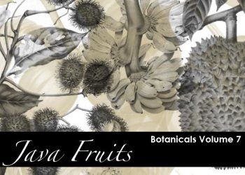 Botanicals- Java Fruits