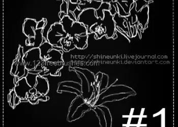 Flower Photoshop Brushes Free