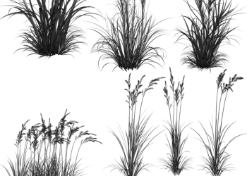 high resolution grass