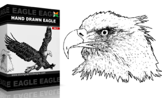 Hand Drawn Eagle