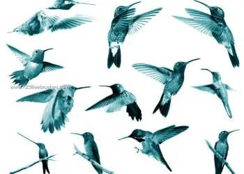 Hummingbirds Photoshop Brushes Free