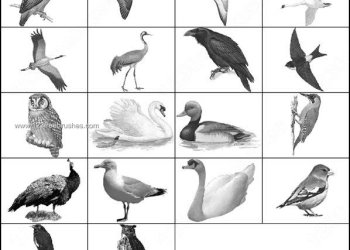 Crow – duck – Heron – Owl Paddy Bird – Peacock – Swan Brushes Free
