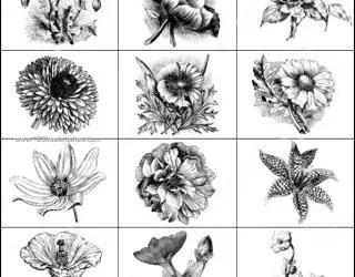 Vintage Flowers Photoshop Brushes