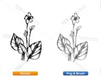 5002012-sketchy-plants-vector-and-photoshop-brush-pack-05_p001