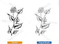 5002012-sketchy-plants-vector-and-photoshop-brush-pack-05_p013