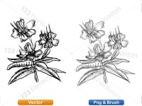 5003053-hand-drawn-sketch-flowers-vector-and-photoshop-brush-pack-06_p007