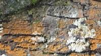 5051002-algae-texture-on-tree-bark-01_p009