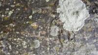 5051002-algae-texture-on-tree-bark-01_p010