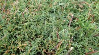 5051003-green-grass-texture-pack-01_p001