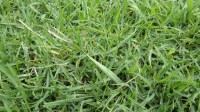 5051003-green-grass-texture-pack-01_p002