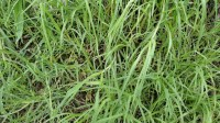5051003-green-grass-texture-pack-01_p006