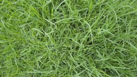 5051003-green-grass-texture-pack-01_p009
