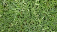 5051003-green-grass-texture-pack-01_p013