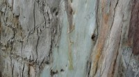 5051007-tree-bark-texture-01_p009
