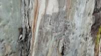 5051007-tree-bark-texture-01_p010