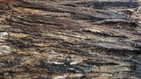 5051008-wet-tree-bark-texture-01_p002