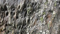 5051008-wet-tree-bark-texture-01_p008