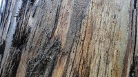 5051008-wet-tree-bark-texture-01_p012